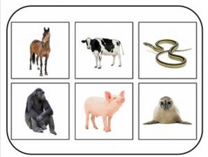 animalsoundbingo2