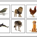 animalsoundbingo3